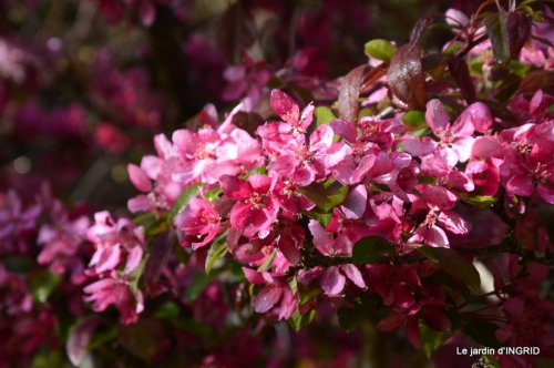 printemps,lilas,tontine 051.JPG