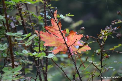 brouillard le matin d'automne 048.JPG