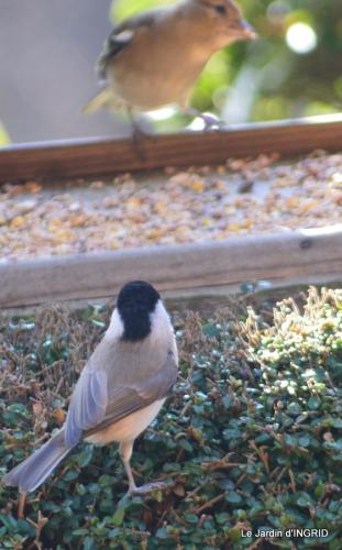les oiseaux,les poules d'eau 025.JPG