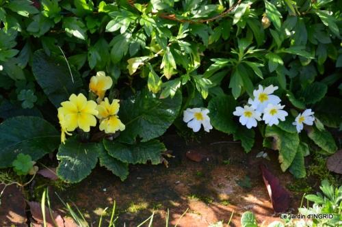 kakis,dernières fleurs,pt jardin,Julie,bassin 055.JPG