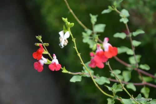 jardin,fruits,Caro,papillons,manthe religieuse,Lalinde 025.JPG