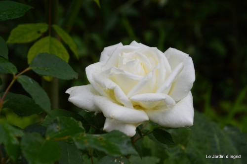 fleurs Beaumont,bouquet,tableau,serre,plants 052.JPG