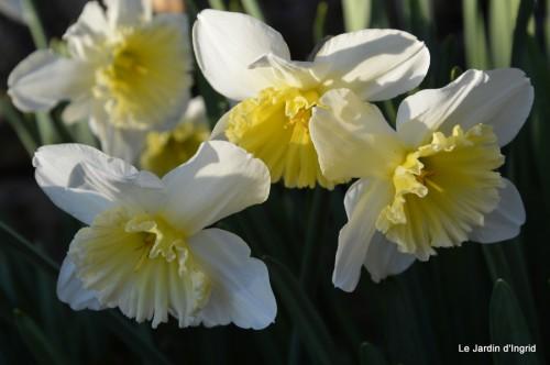 bouquet mamy,jacinthes,semis,jardin 078.JPG