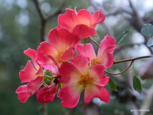 couleurs d'automne,bouquet,lune 012.JPG