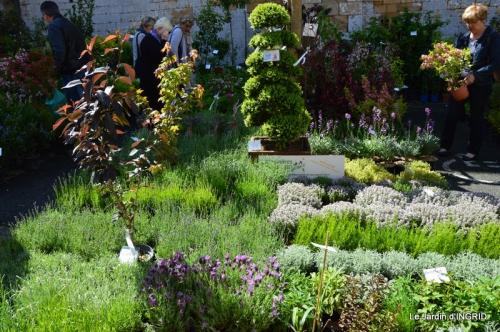 Cadouin,ancolies,roses,pollen,osier,photos Fabien,coquelicots 008.JPG