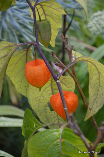 jardin,fruits,Caro,papillons,manthe religieuse,Lalinde 027-001.JPG