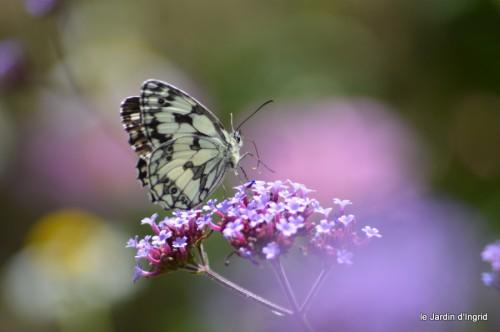 coeur des fleurs,papillons,libellules 117.JPG