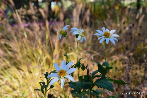 jardin, feuilles,sauges,gloriette,land art 008.JPG