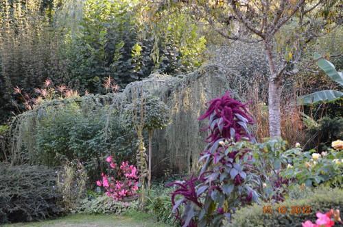 citrouilles,jardin,Combarel 013.JPG