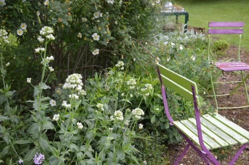 rosiers,fleurs blanches,pollen,magasin 069.JPG