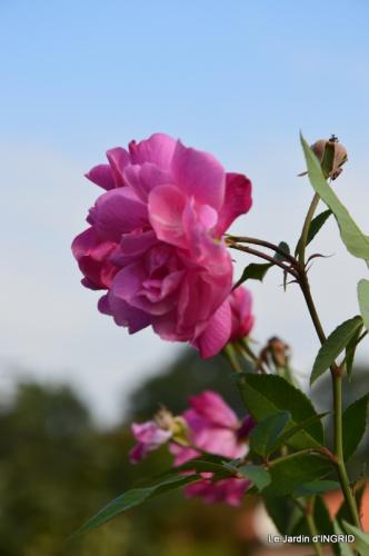 jardin Mme Perichou,grandes fleurs,bouquet,jardin 035.JPG