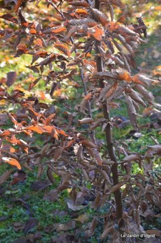 dernières automne,givre,chat 060.JPG