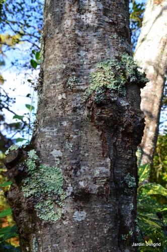 troncs,automne,vieilles photos 075.JPG