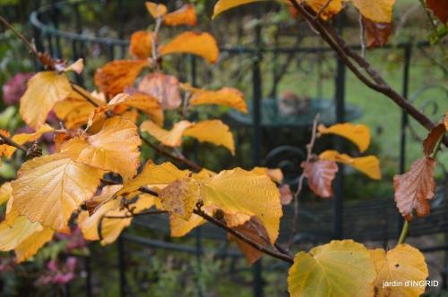 couleurs d'automne,bouquet,lune 109.JPG
