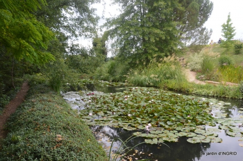 orage,puces,bouquet,Anniv.Ines,Brantome,Jardins d'eau 256.JPG