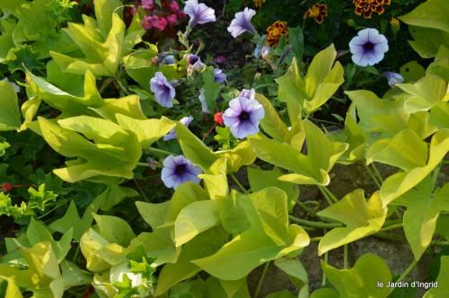 jardin,fruits,Caro,papillons,manthe religieuse,Lalinde 082.JPG
