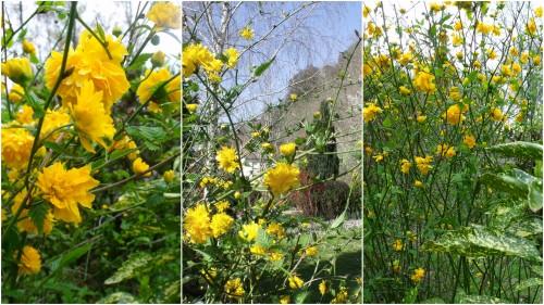 2012-03-30 30 mars1.jpg